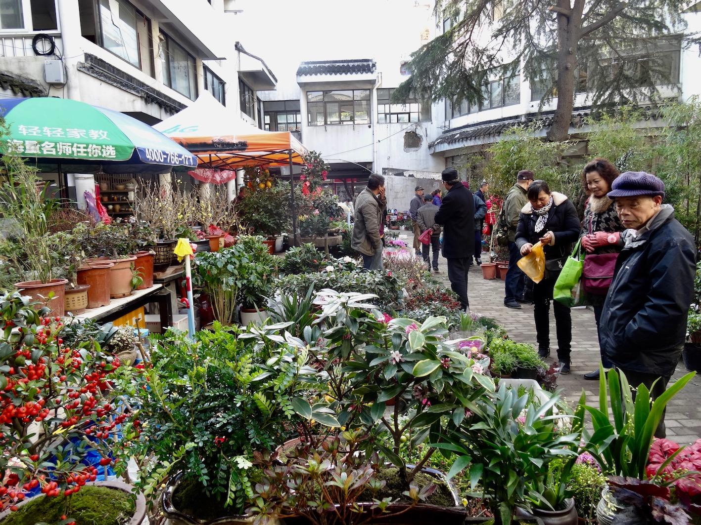 Pishi Street Plant Market Suzhou Jiangsu Province China