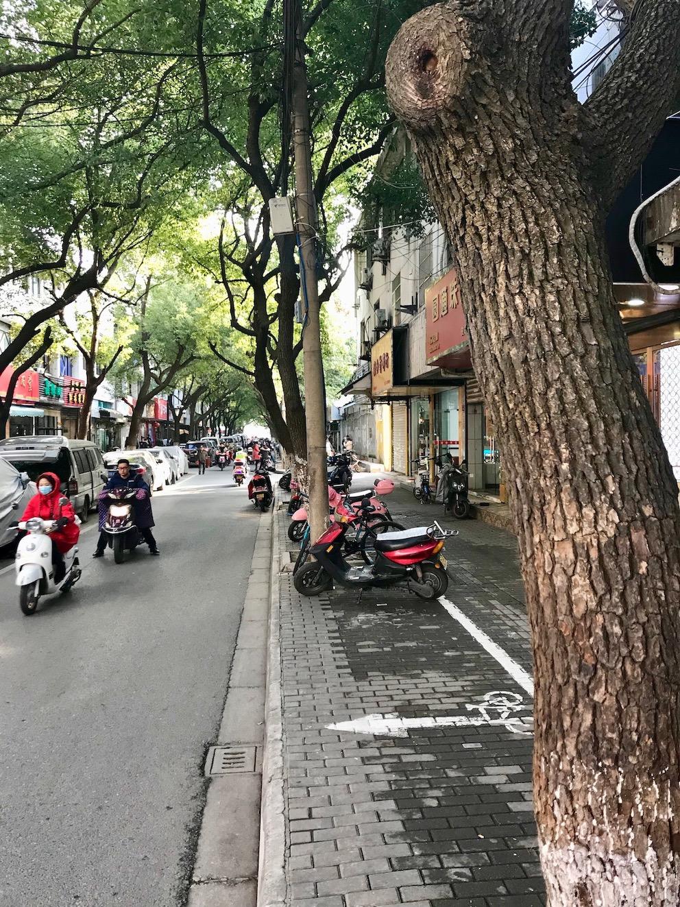Pishi Street plants flowers and rocks Suzhou China