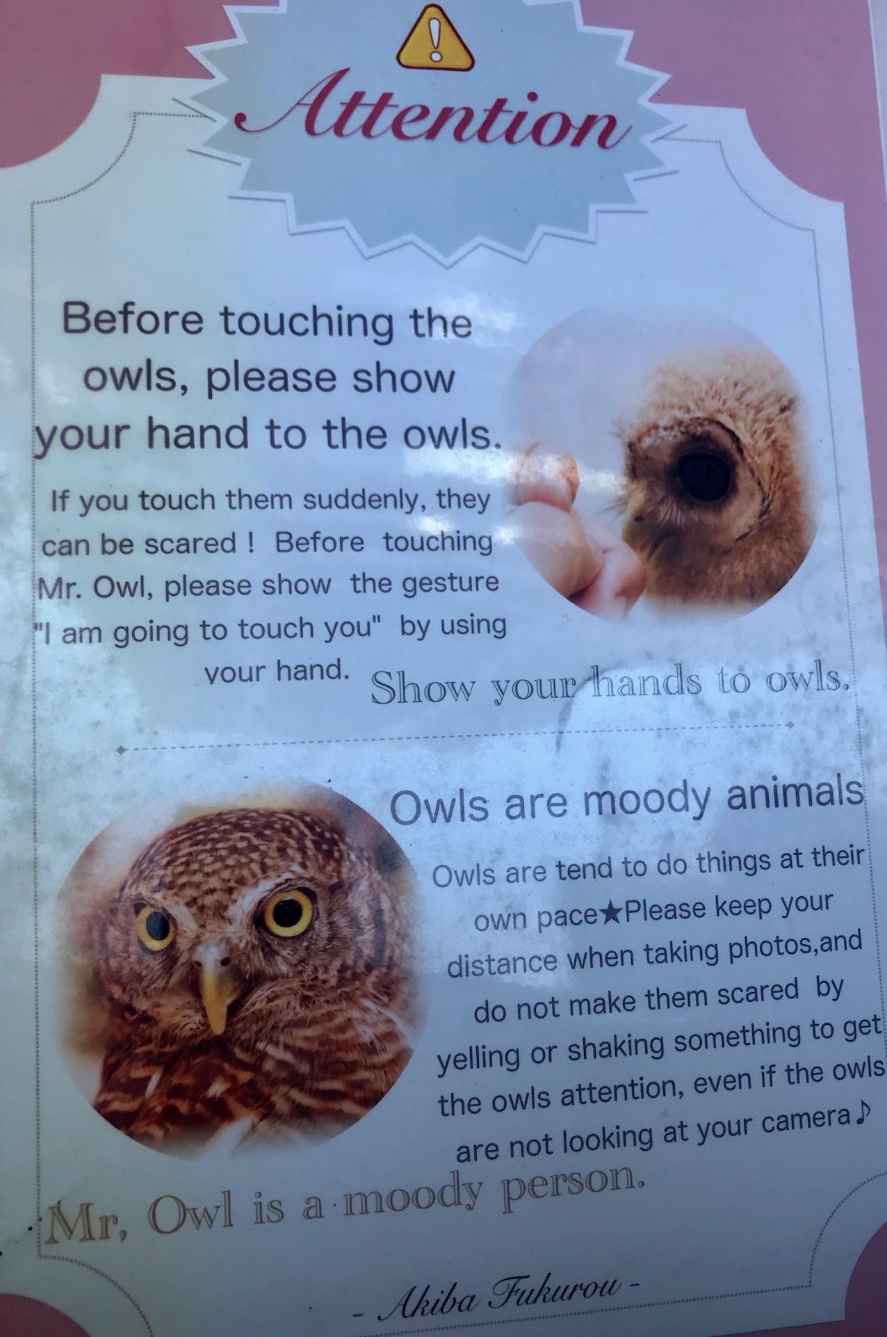 Owl cafe etiquette Akiba Fukurou Owl Cafe Akihabara Tokyo