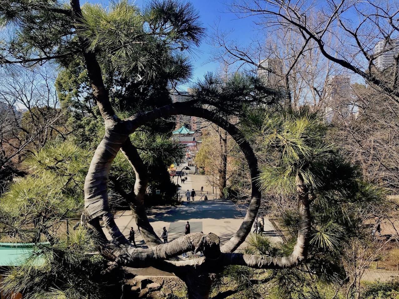 Pine Tree of the Moon Kiyomizu Kannon Temple Ueno Park Tokyo