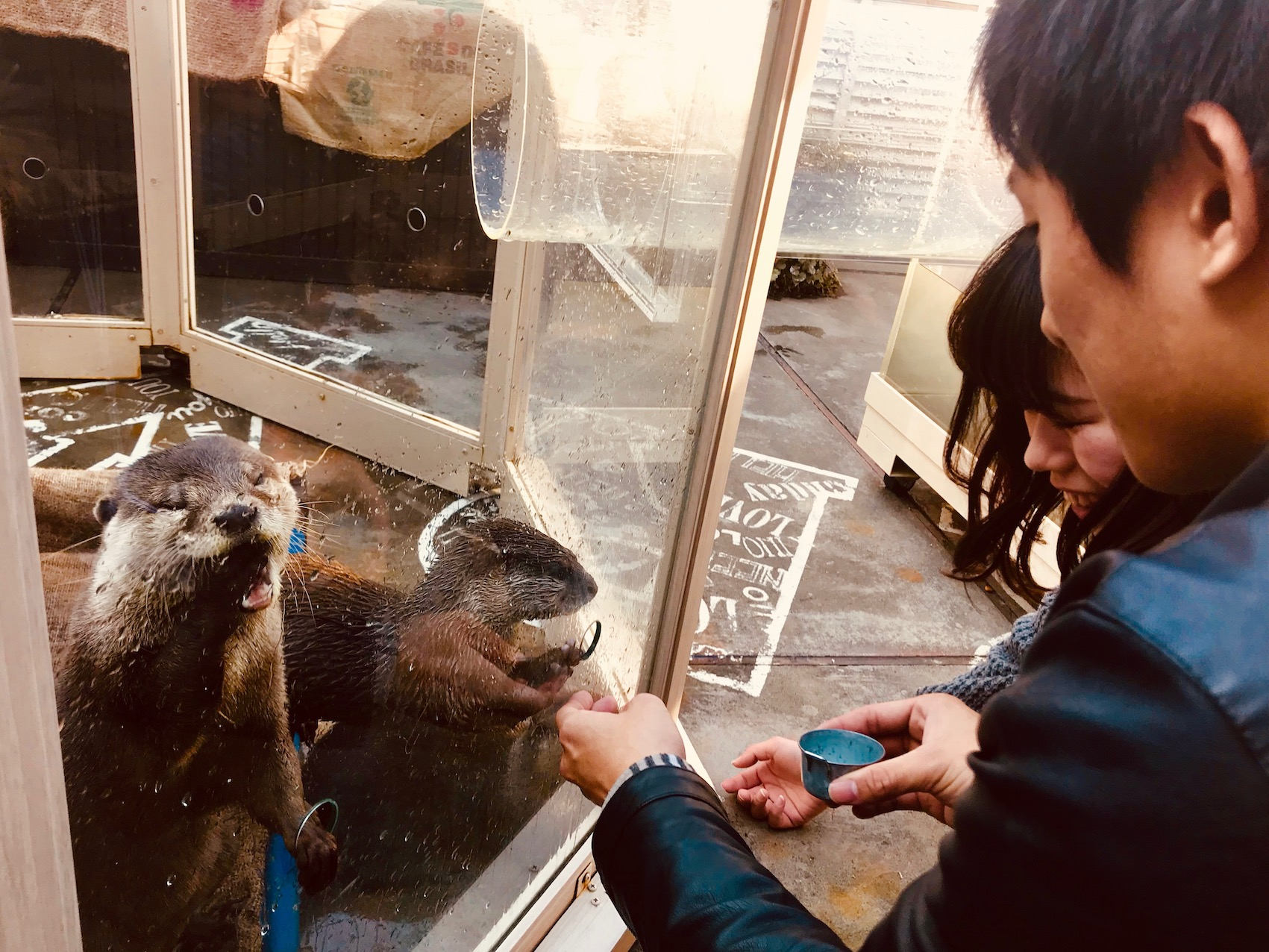Frustrated otters Harry Zoo Cafe Harajuku Tokyo