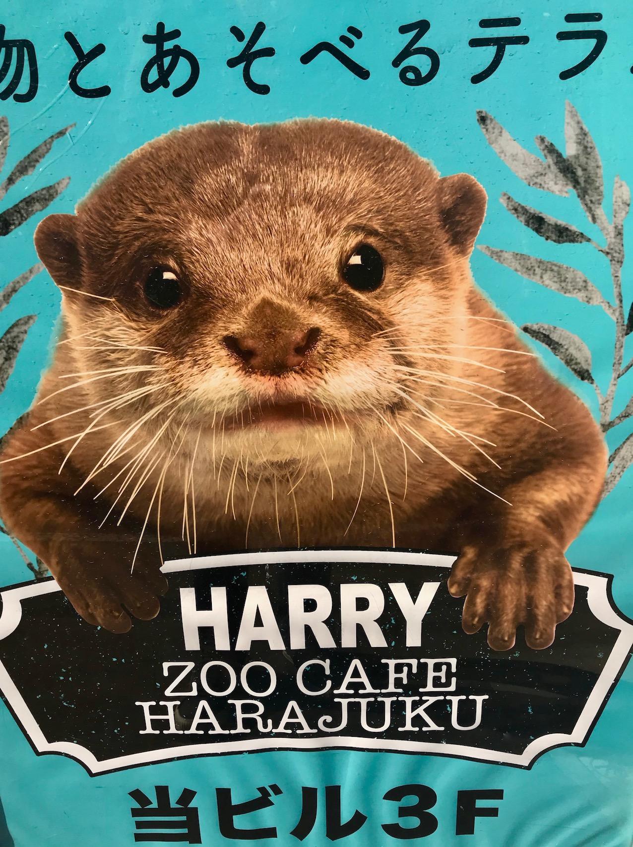 Harry Zoo Cafe Harajuku Tokyo