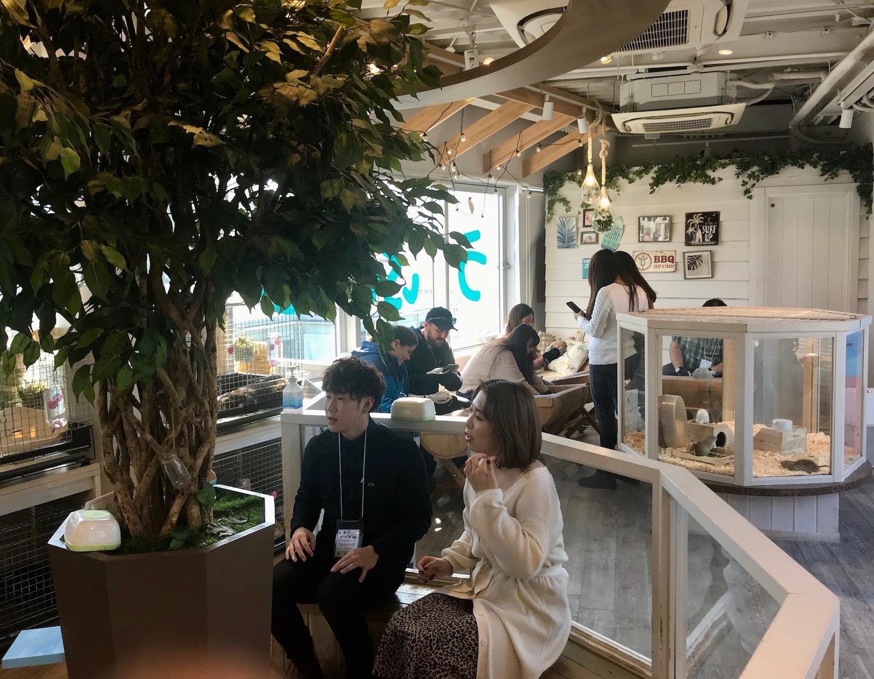 Inside Harry Zoo Cafe Harajuku Tokyo