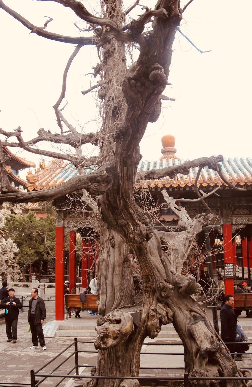 Imperial Garden Forbidden City Beijing.