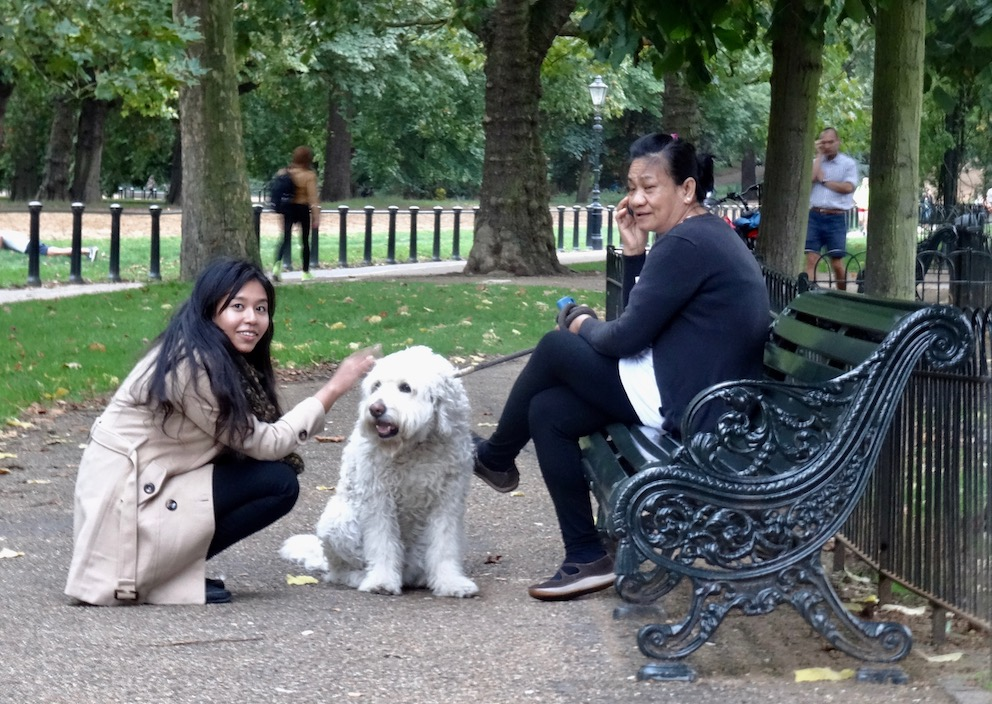 Dog walking Hyde Park London.