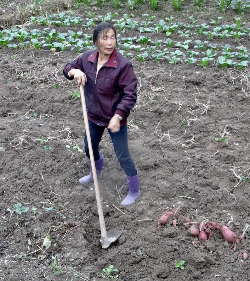 Farmer Xu Ao Di Village Taishun County China.