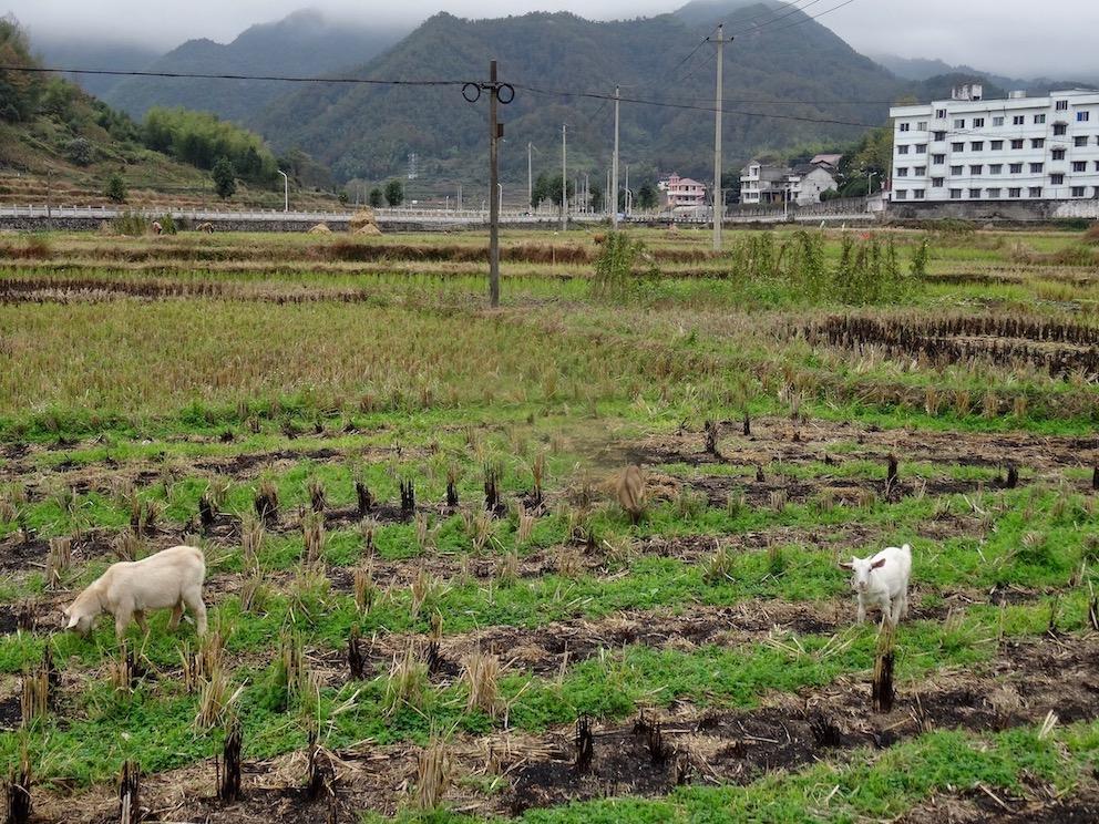 What to see and do Taishun County Zhejiang Province China.
