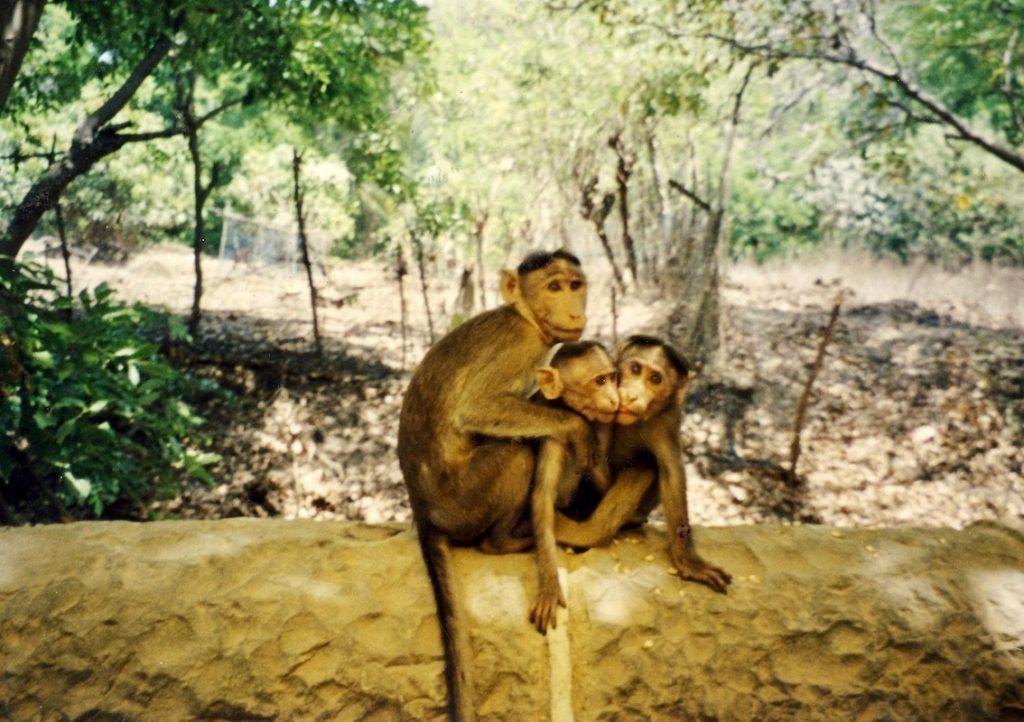 Monkey family Elephanta Island Mumbai.