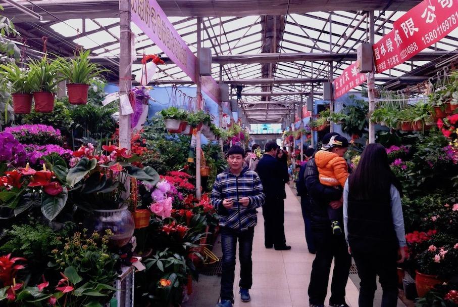 Plant Market Shangdi.
