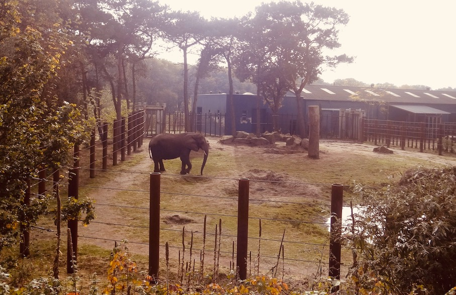 Elephant enclosure Beekse Bergen Safari Park The Netherlands.
