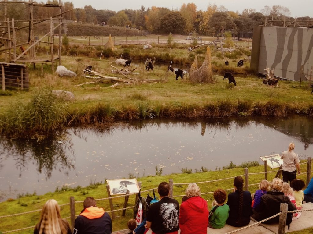 Gorilla enclosure Beekse Bergen Safari Park.