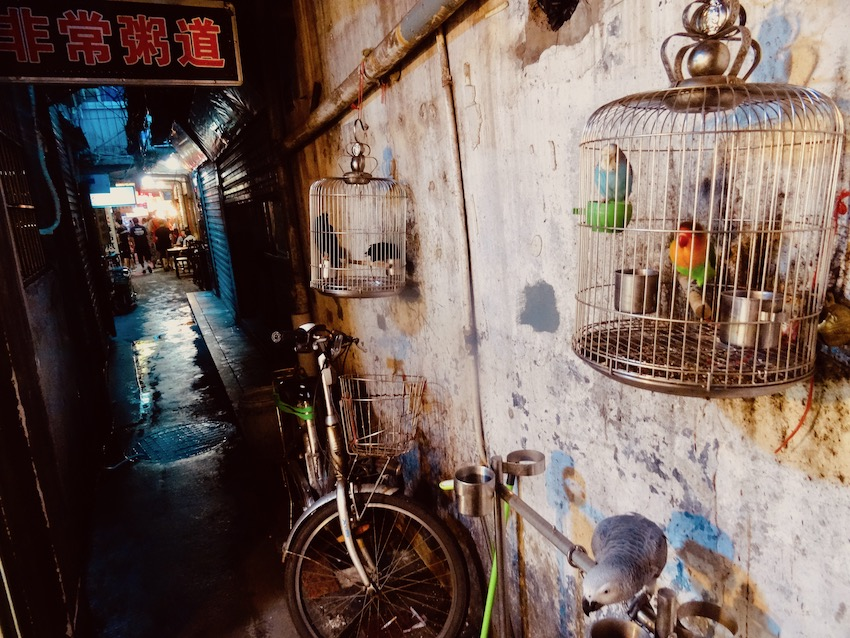 Pet parrots market street Xiamen China.