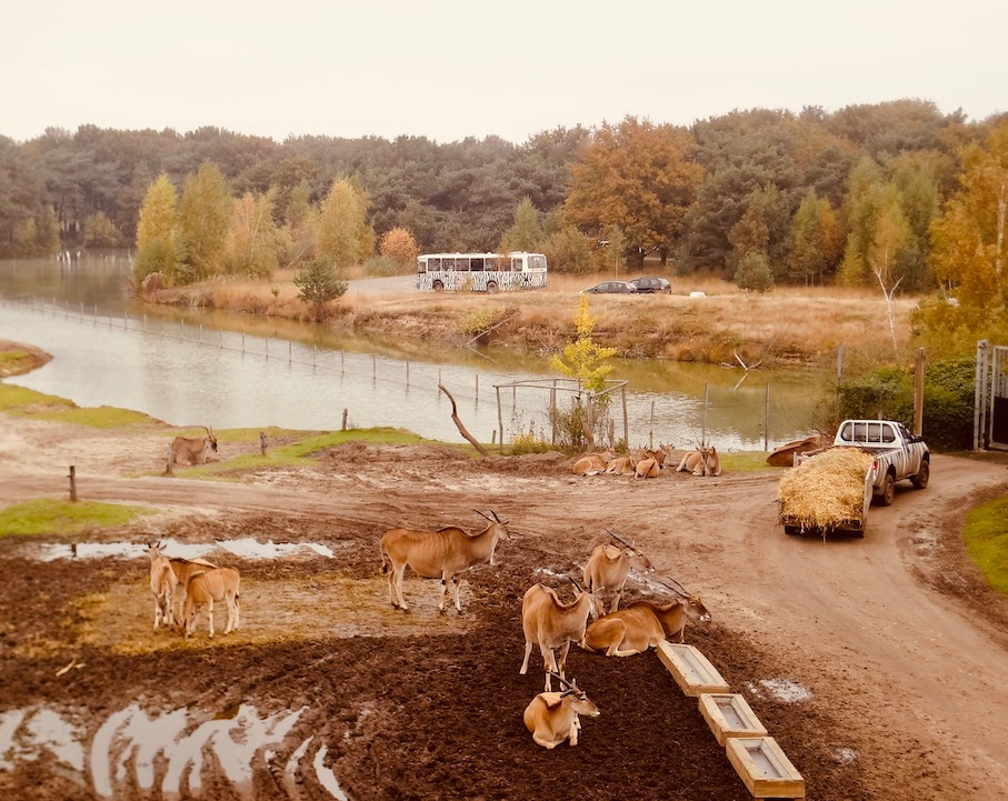 Visit The Beekse Bergen Safari Park The Netherlands.