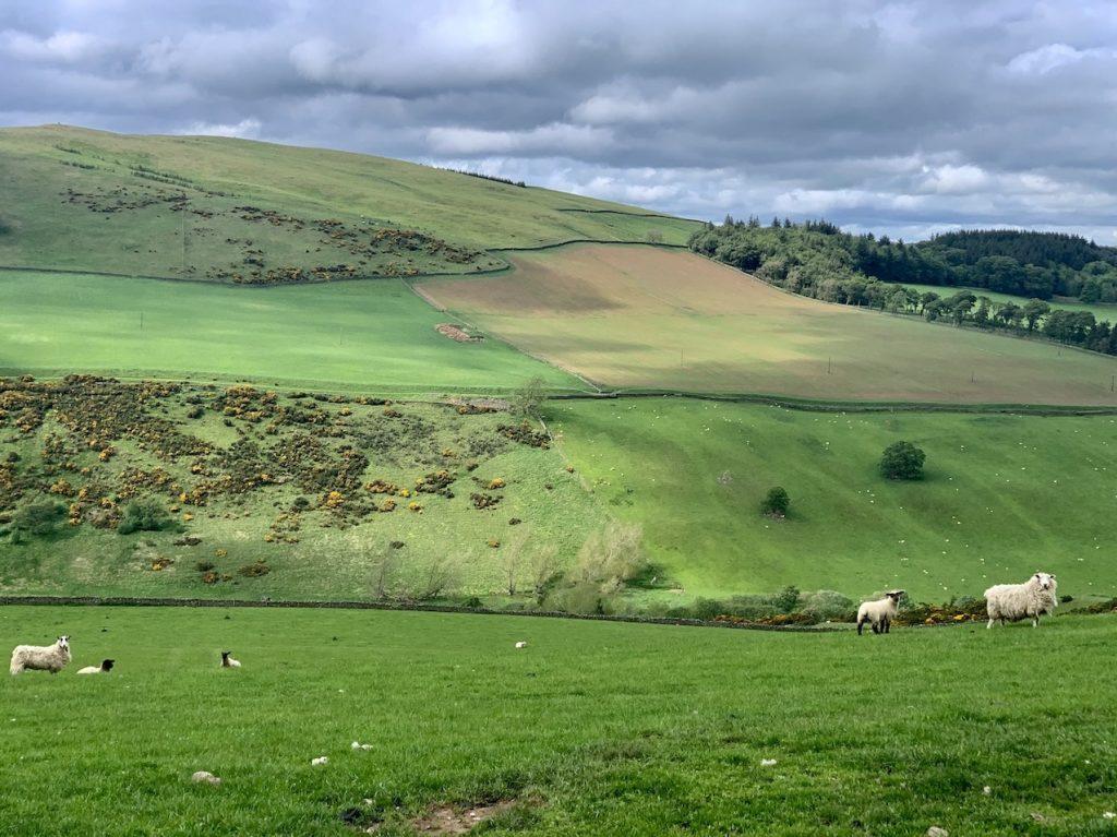 Beautiful farmland Meigle Circular Scotland.