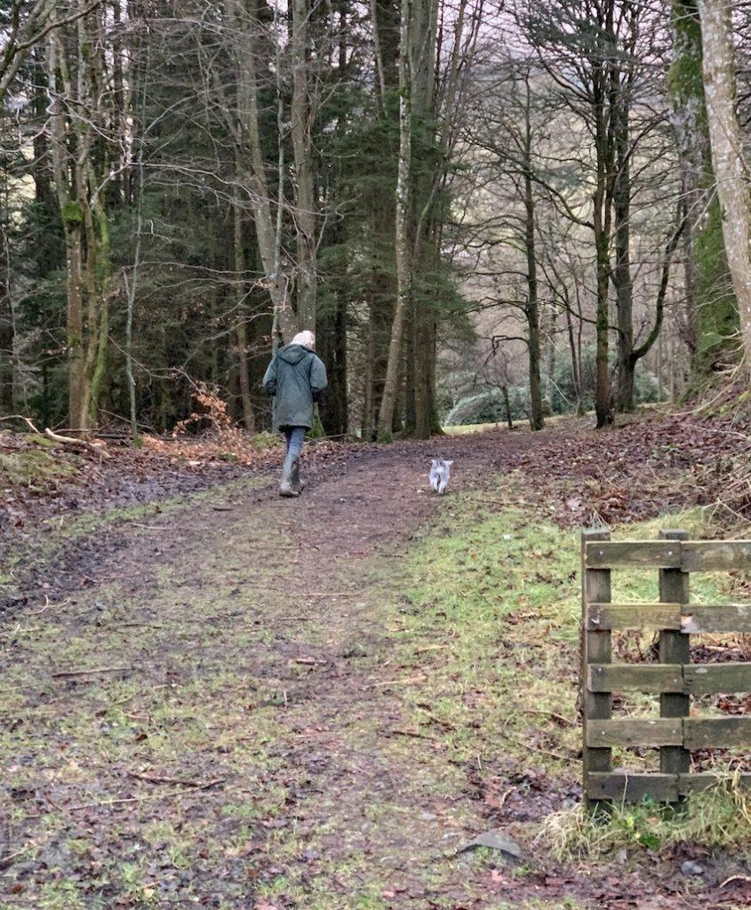 Dog walking Torwoodlee Scotland.