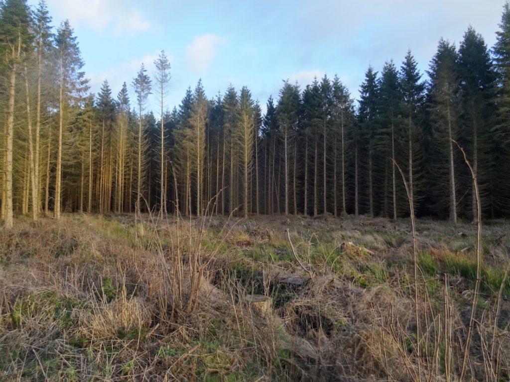Visit Bowmont Forest Scotland.