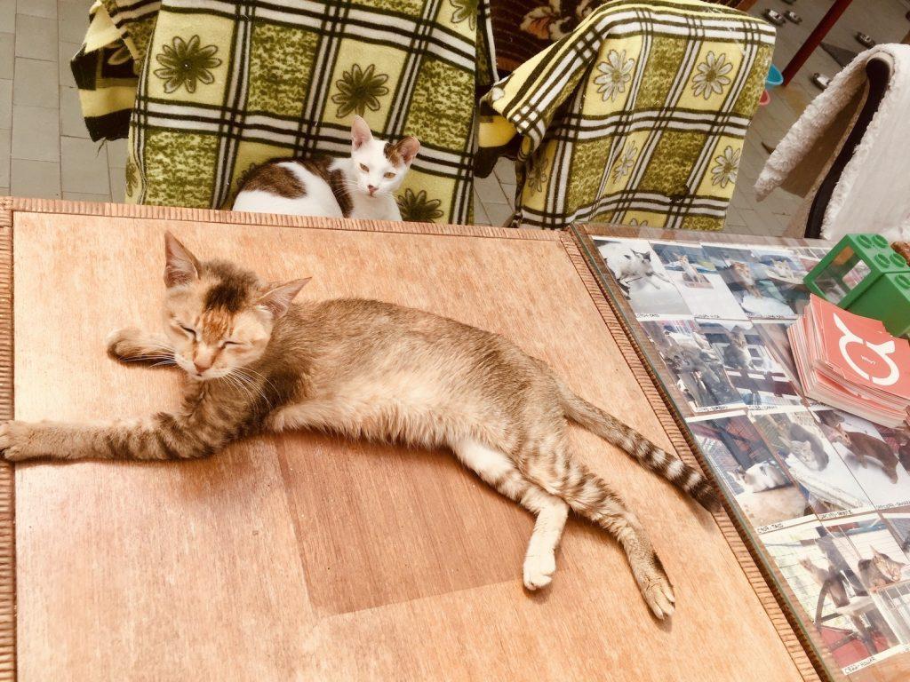Anima Macau Animal Protection Society