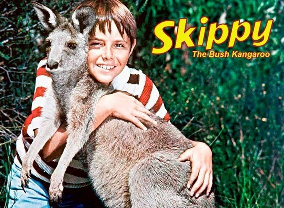 Skippy The Bush Kangaroo.