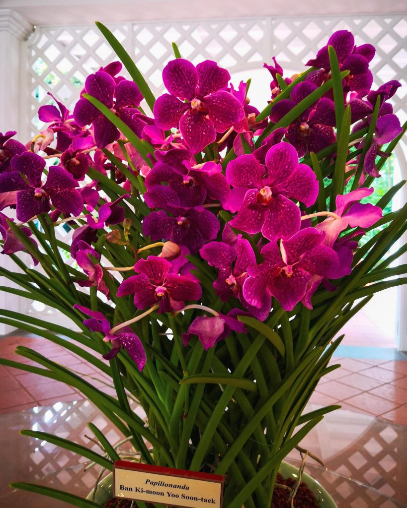 Ban ki-moon tribute Singapore National Orchid Garden