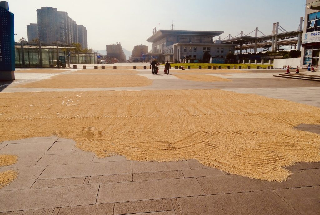 Grains drying outside Cangnan County Train Station China.