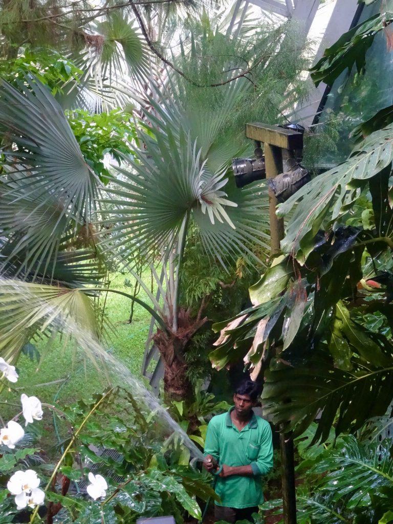 Orchid Farm Singapore Botanic Gardens
