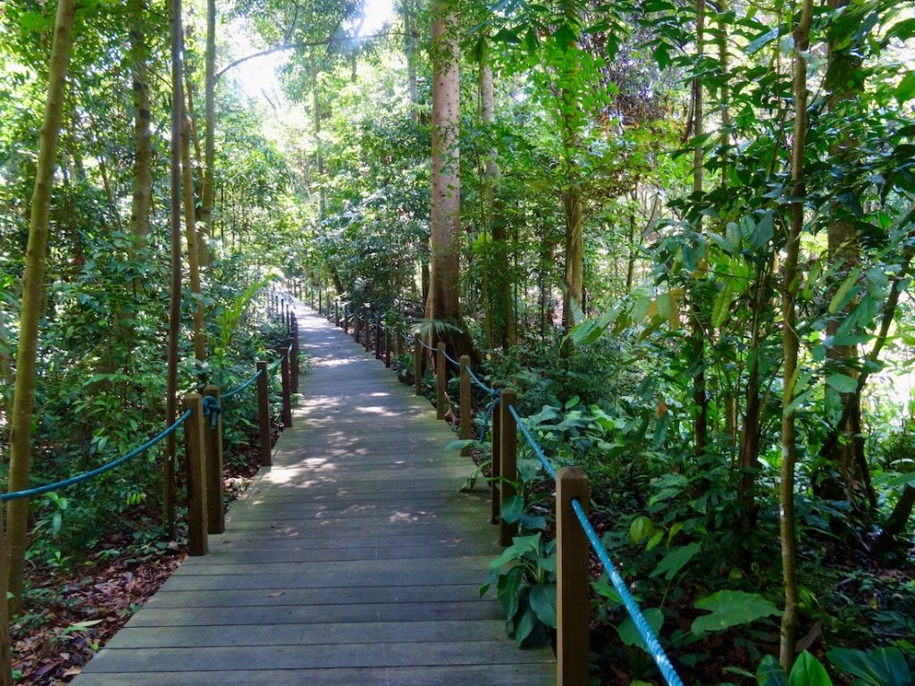 Rainforest walking trail Singapore Botanic Garden