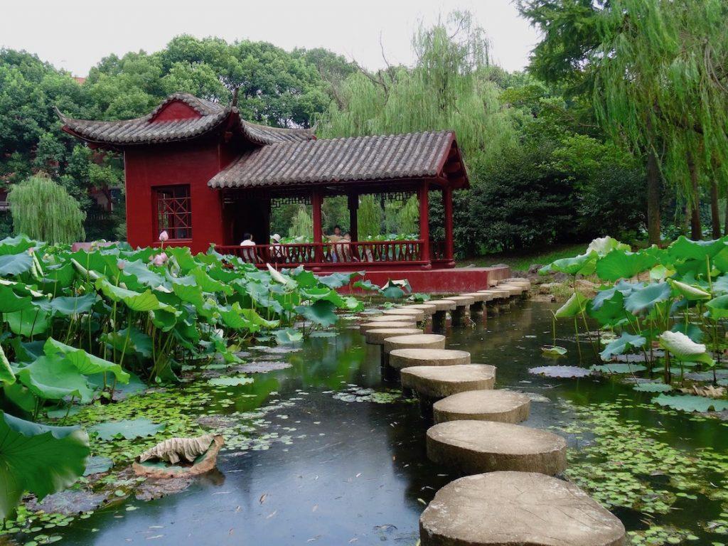 Camellia Culture Park Jinhua.
