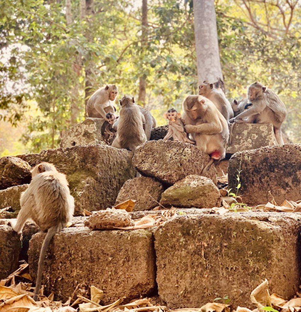 Monkeys outside Angkor Thom Temple Cambodia.