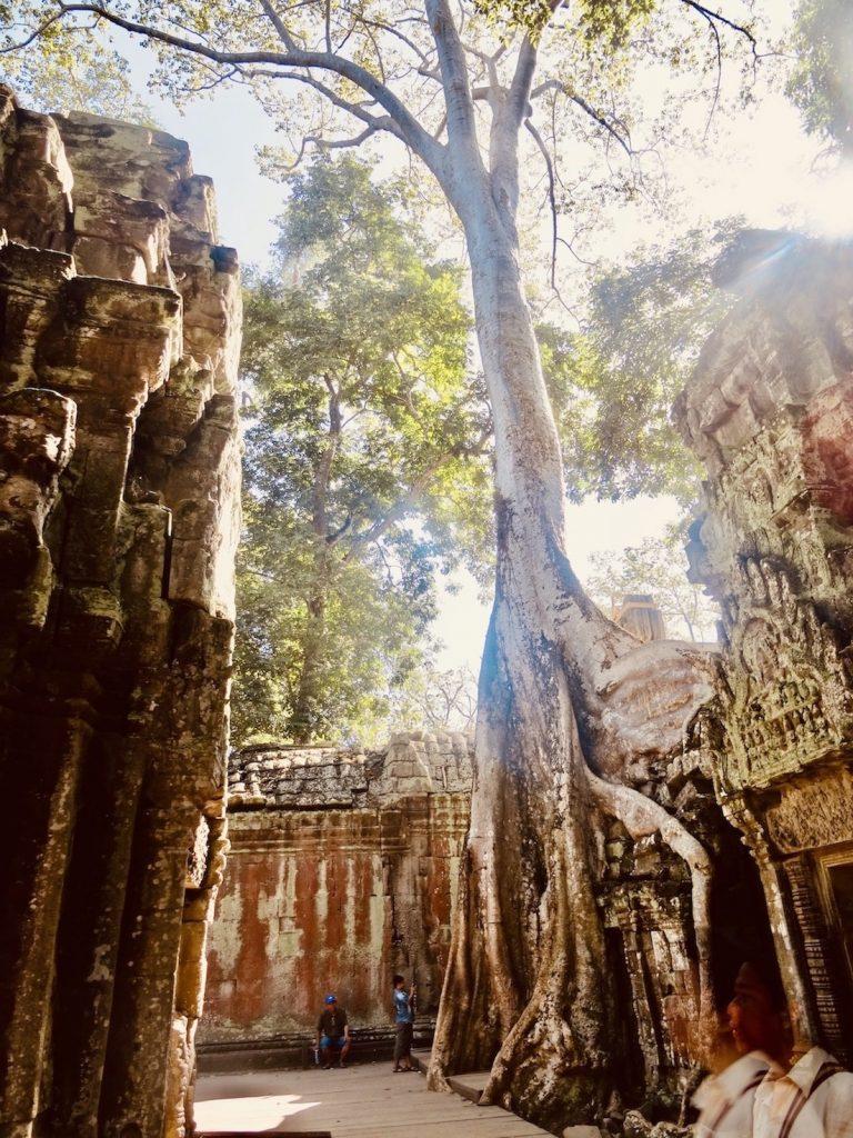 Tomb Raider tree Ta Prohm Temple Cambodia.