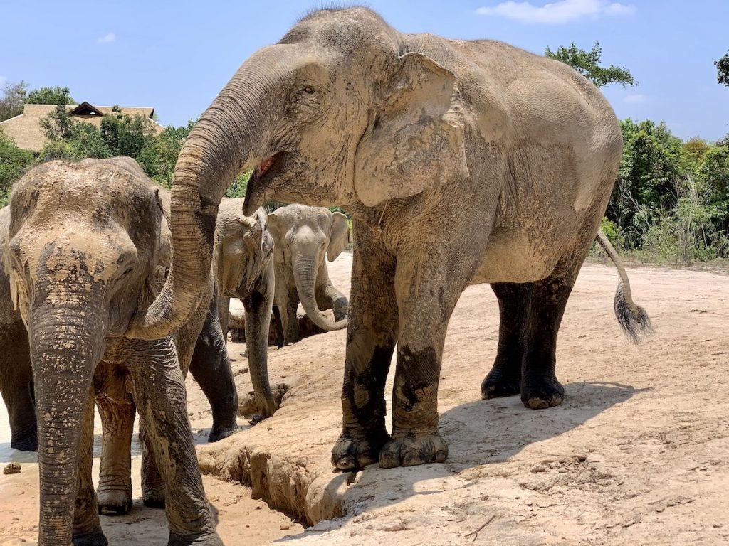 Elephant sanctuary Cambodia.