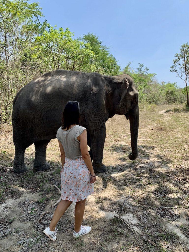 Elephants in Cambodia.
