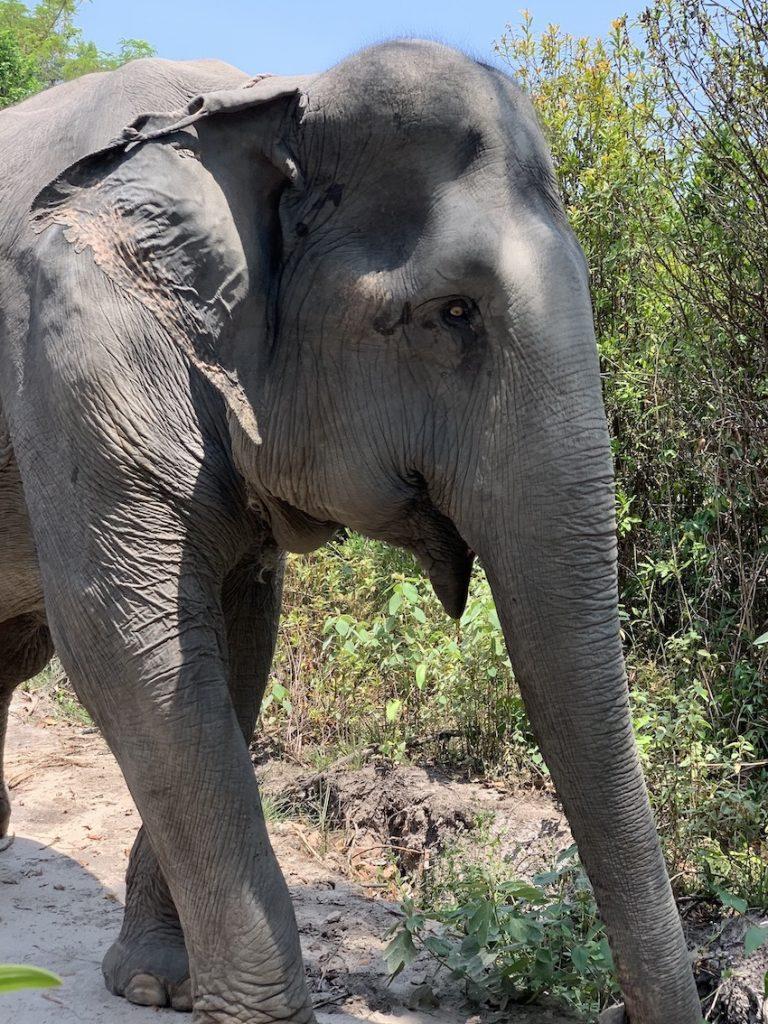 Kulen Elephant Sanctuary.