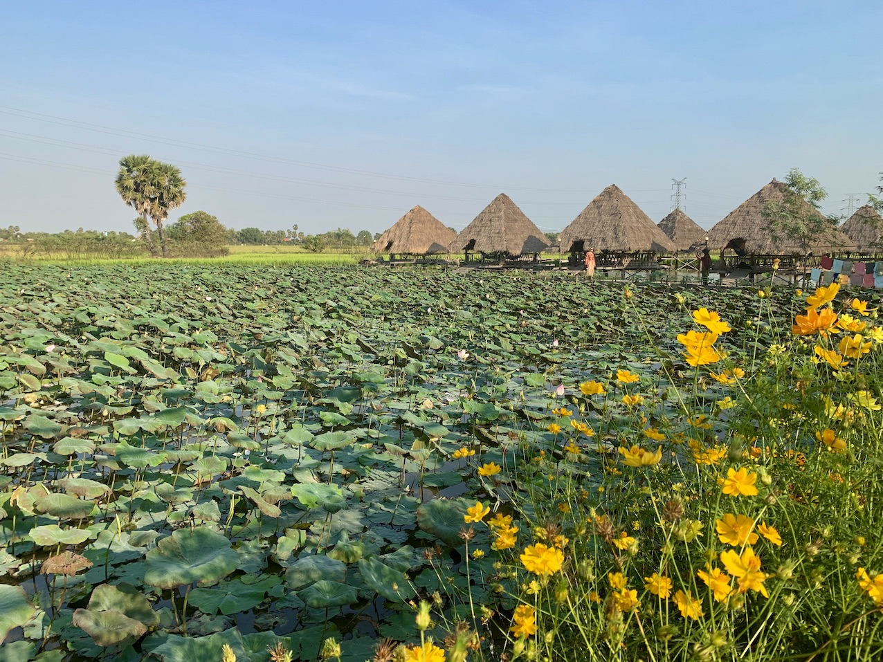 Lotus Farms Siem Reap.