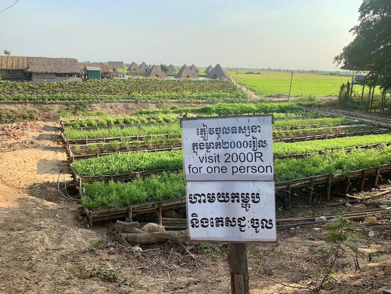 Lotus farms in Siem Reap.