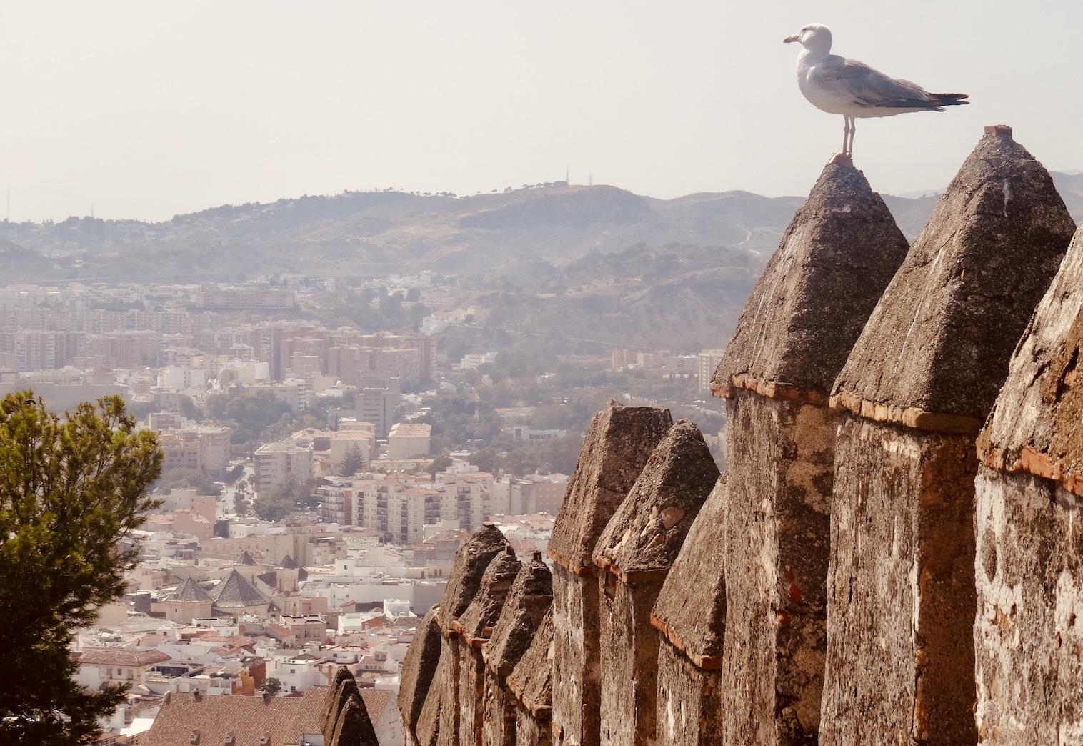 A seagull on Malaga Alcazaba.