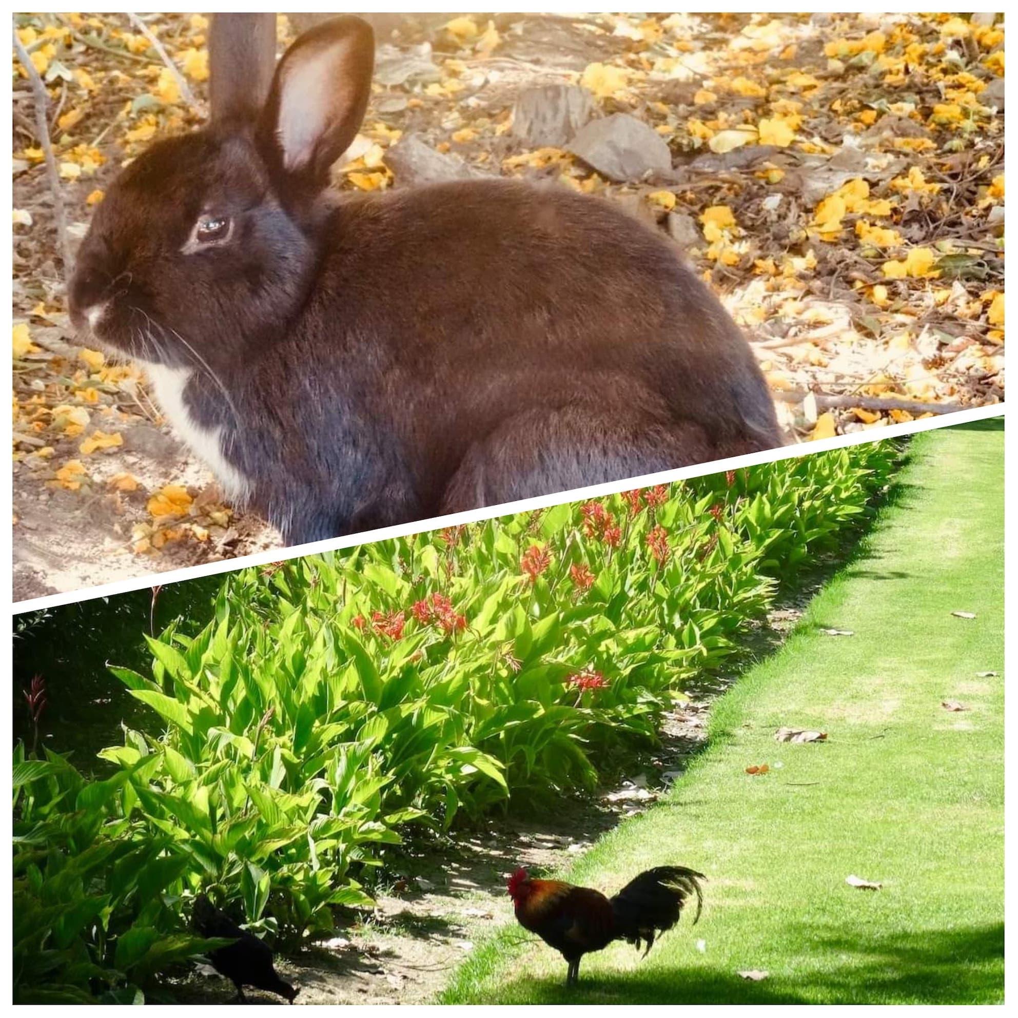 Animals at Parque de la Paloma Benalmadena.