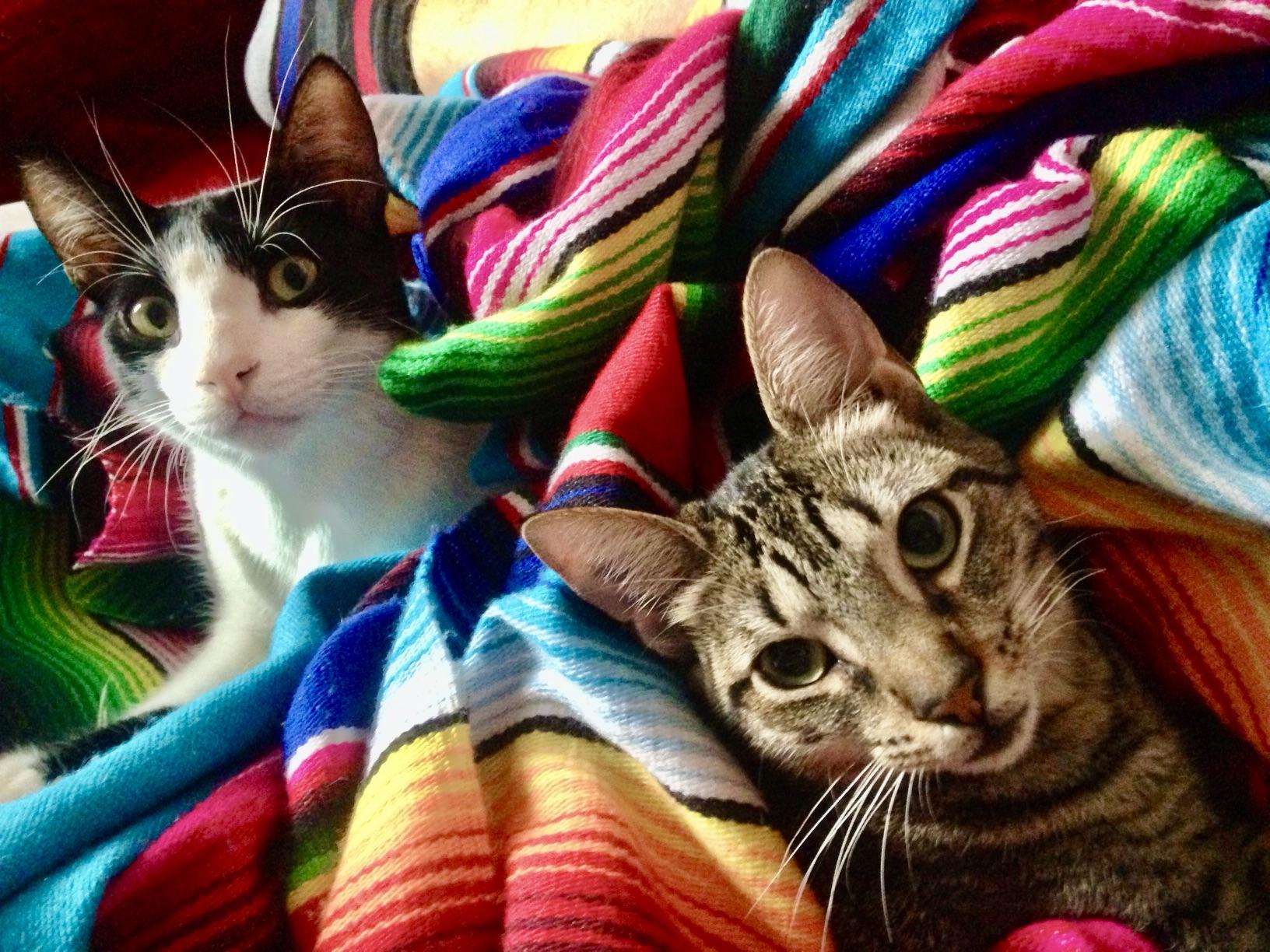 Bill and Scarlett Malaga cats.