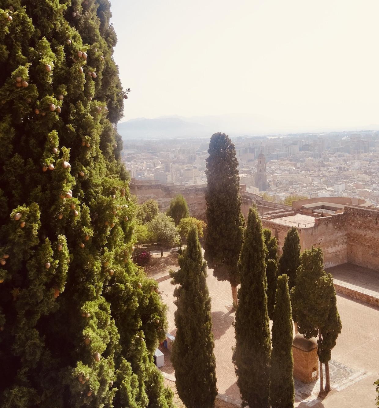 Pine trees Malaga Castle.