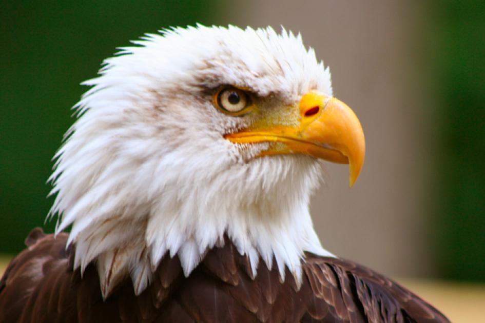Beautiful eagle.