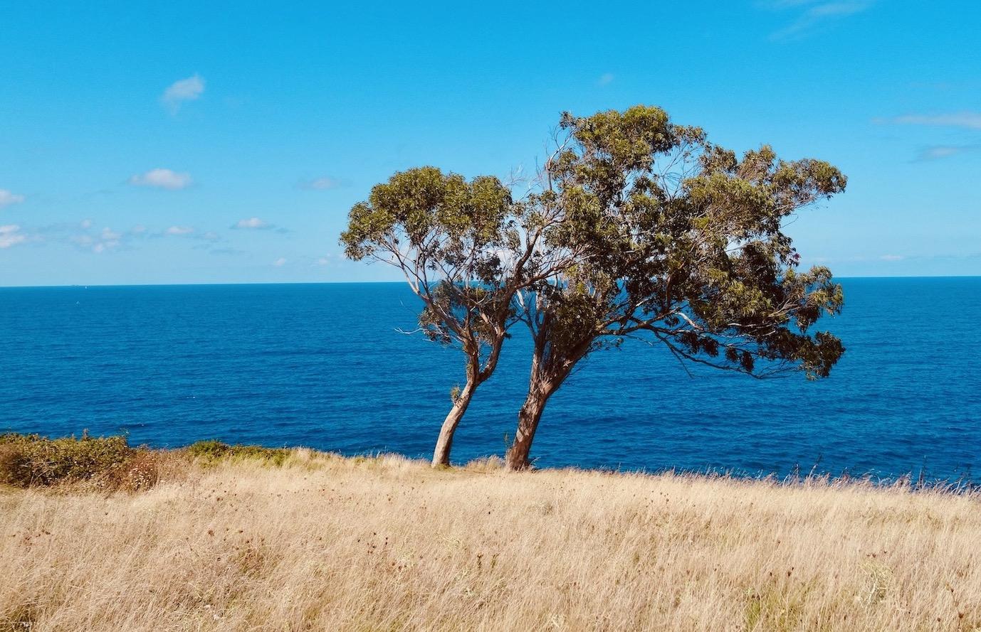 Cliffside tree Cotolino Park.