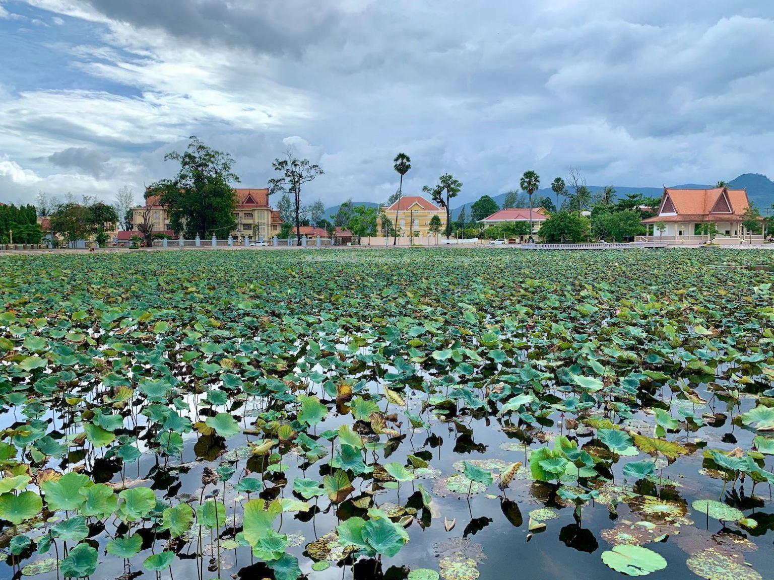 Lotus Pond Cool Spots Around Kampot.