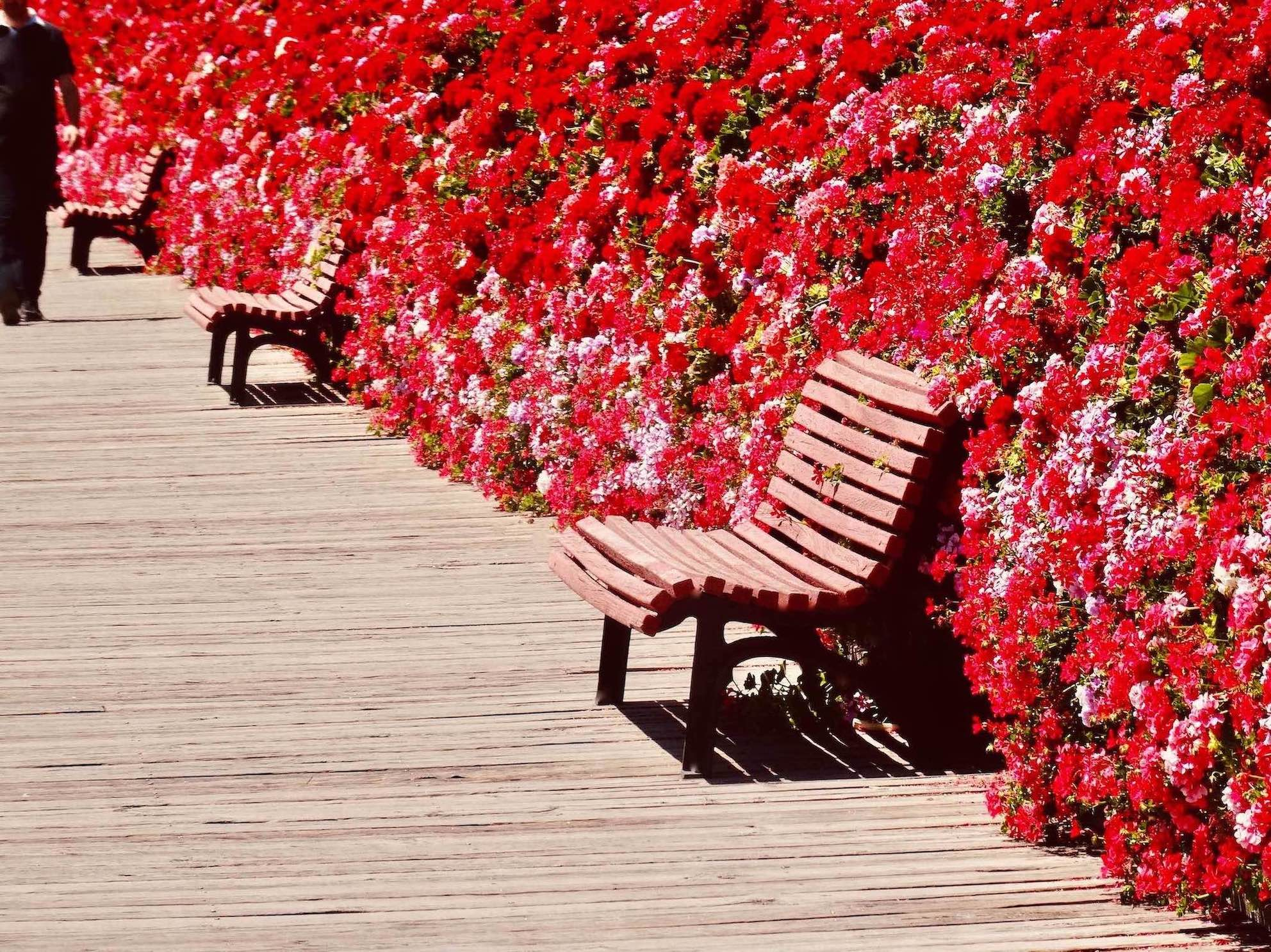 Flower Bridge Valencia.