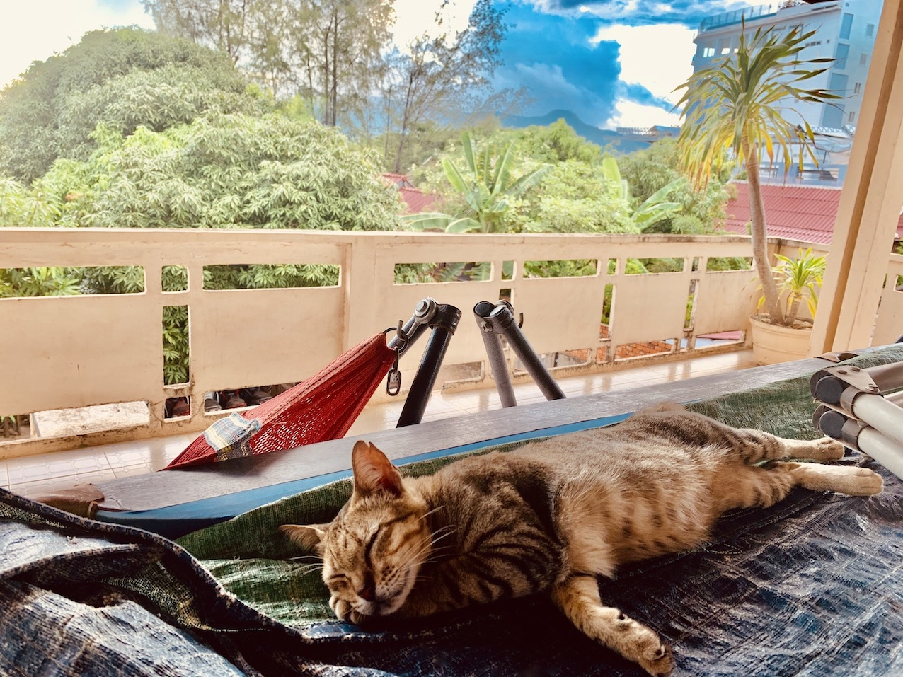 Cat friendly guesthouse Kampot.