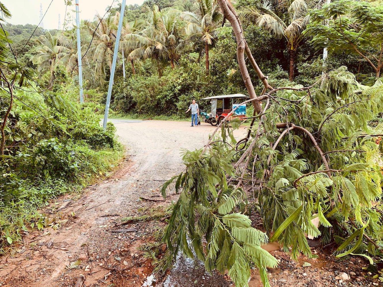 Fallen tree Kep Cambodia.