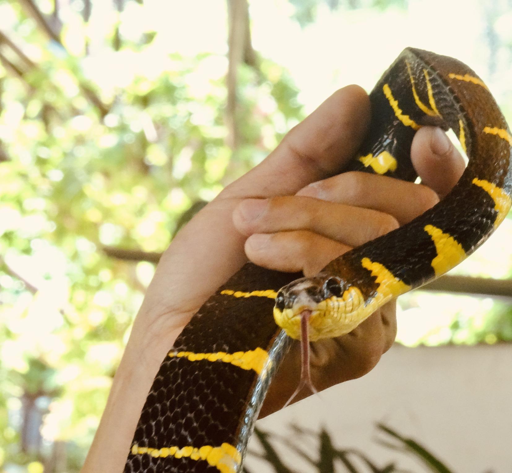 Snake farm Bangkok.