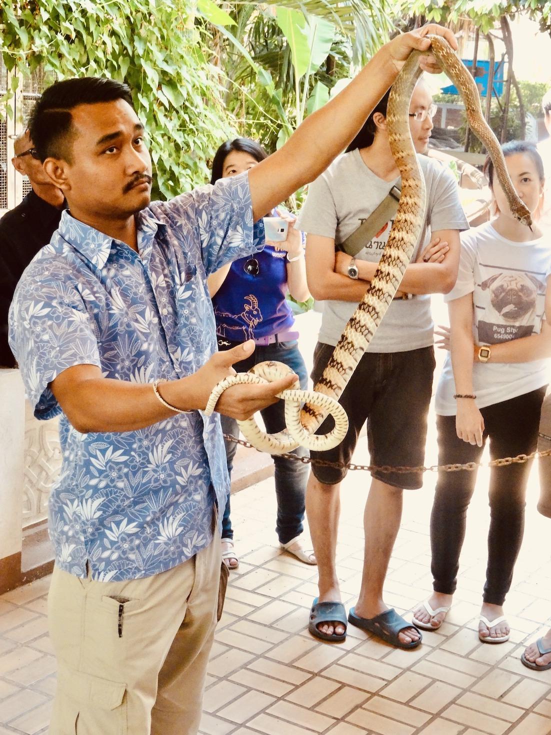 Snake show Bangkok.