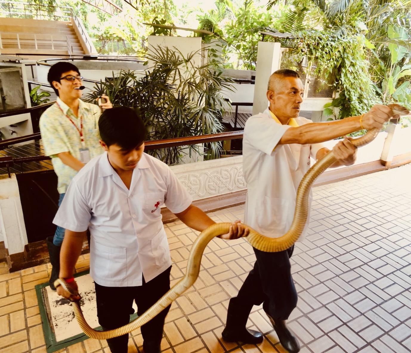 Visit Bangkok Snake Farm.