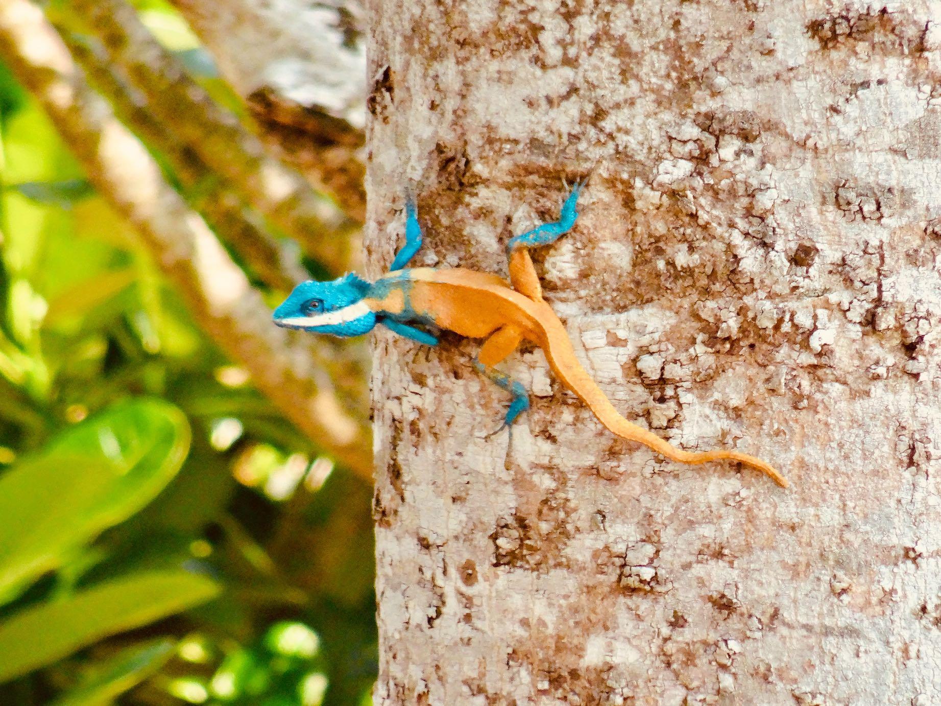 Beautiful lizard Sangkhlaburi Thailand