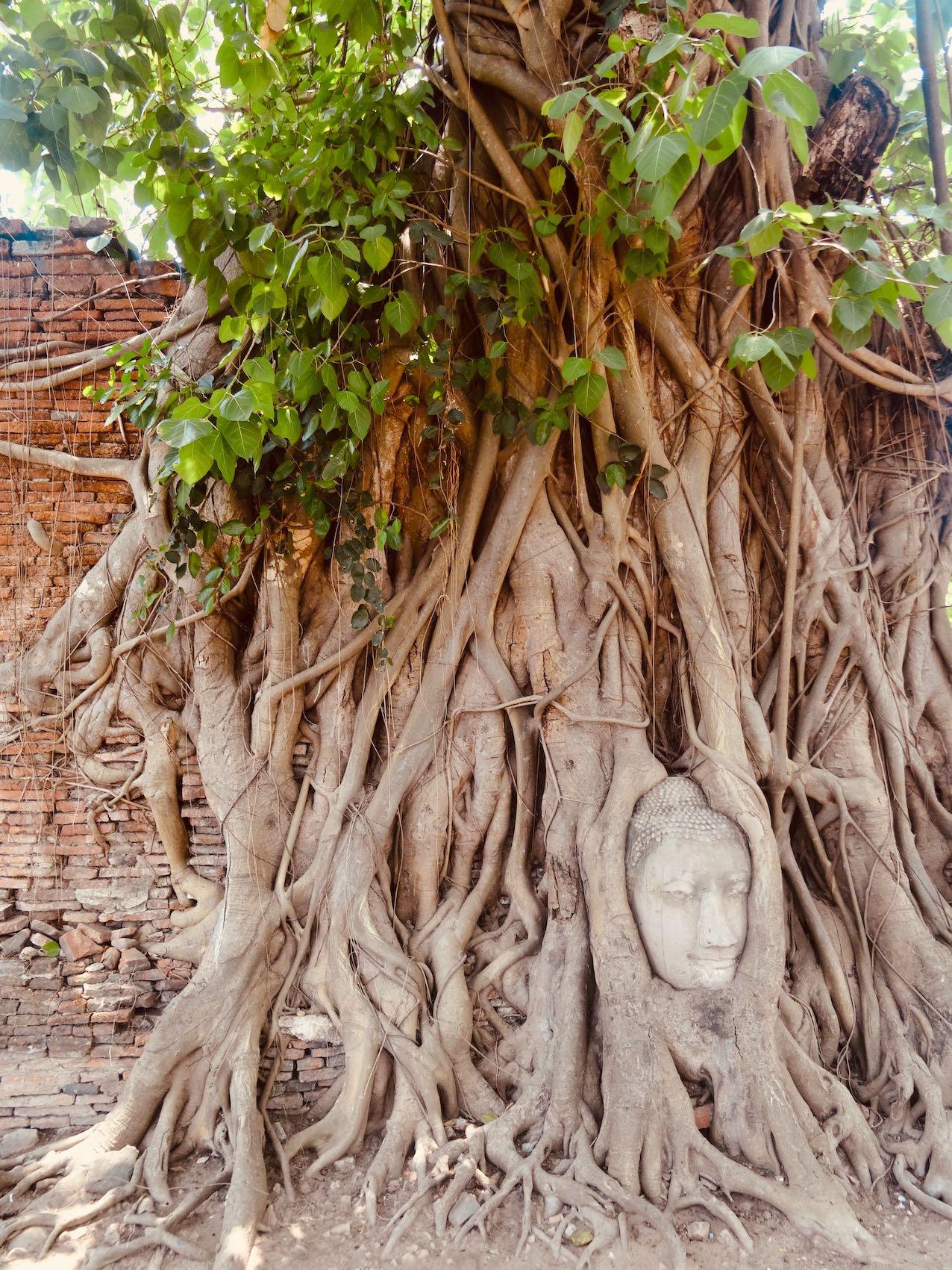 Buddha Head in tree roots Ayutthaya Historical Park