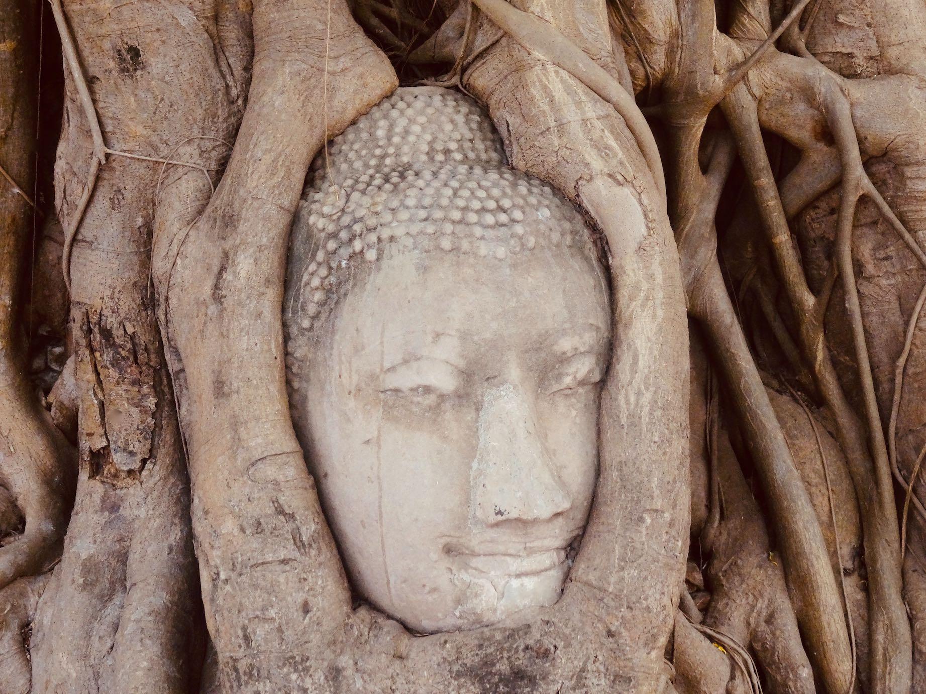 Buddha head in tree roots Wat Mahathat
